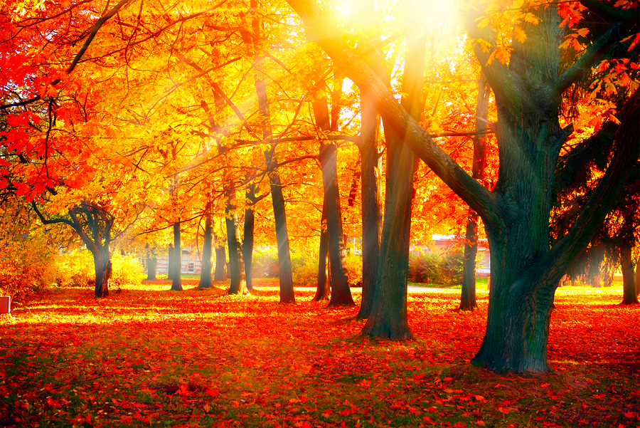 Autumn. Fall scene. Beautiful Autumnal park. Beauty nature scene