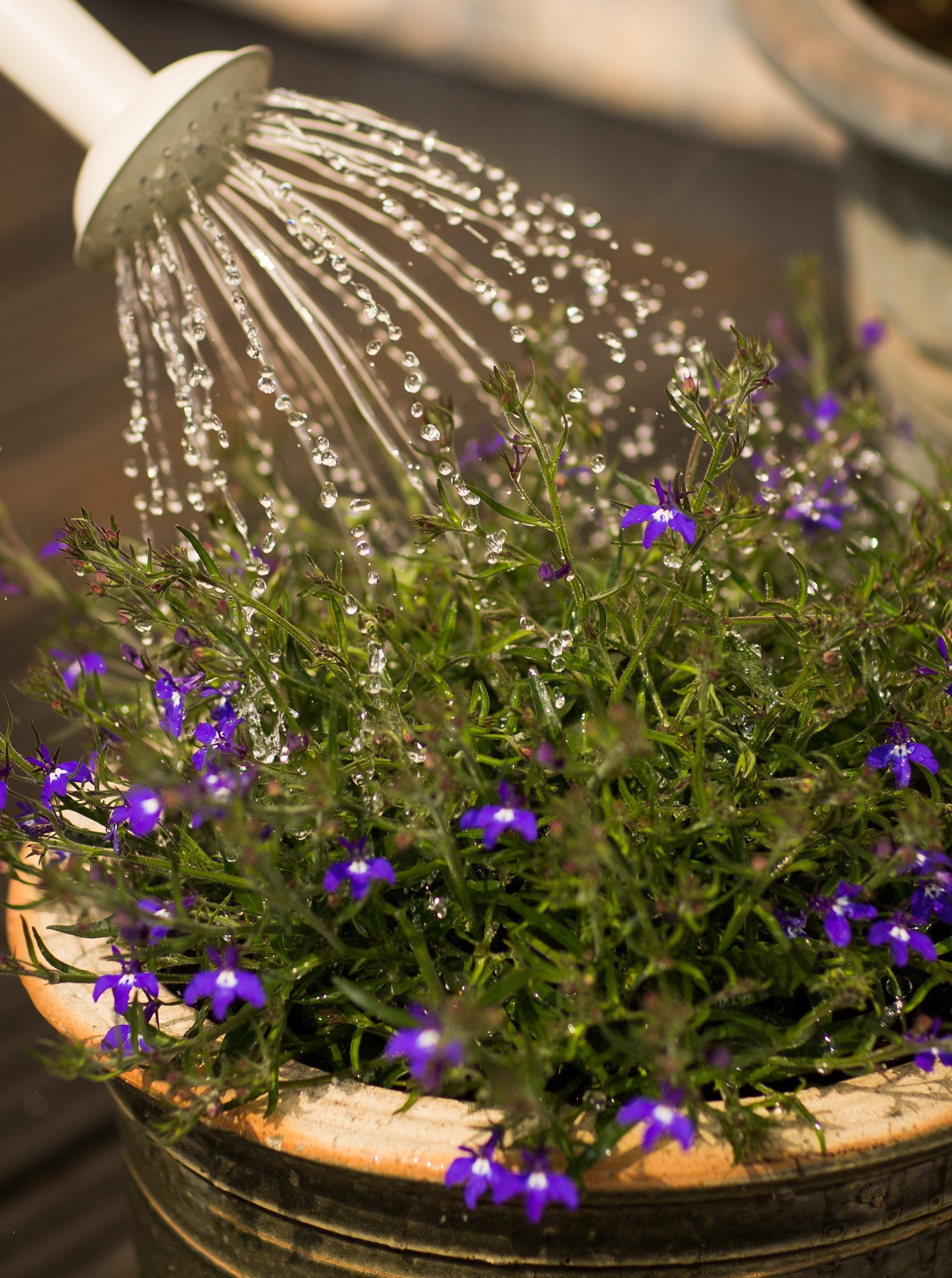beautiful-bloom-blooming-blur-347729